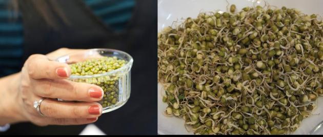 緑豆の発芽前・発芽後。どうやって発芽させるか、方法はクラスで聞いてくださいね♪
